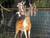 Beautiful 300'' Breeder Bucks-dandy_8-3-2009.jpg