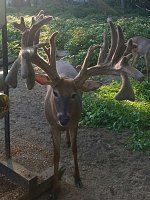 Sullins Whitetails & Exotics-pictureperfecta.jpg