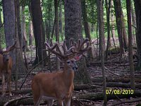 Free straw of semen-2010-adams-white-buck-010.jpg