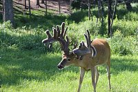Missouri Whitetail Breeders and Hunting Ranch Association Meeting and Fundraiser!!!-gomax.jpg