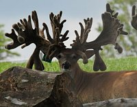 Missouri Whitetail Breeders and Hunting Ranch Association Meeting and Fundraiser!!!-energizer.jpg