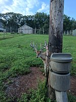 Shooter/breeding bucks for sale-img_20170825_073527.jpg