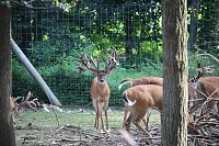 Stocker buck Available-img_4954.jpg