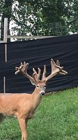 Breeder bucks? or shooters?-yellow-4.jpg