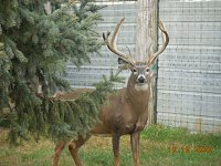 Shooter buck-dscn7233.jpg