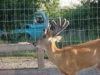 Carpenter Whitetails-dsc08971-copy.jpg