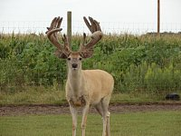 Carpenter Whitetails-dsc09123-copy.jpg