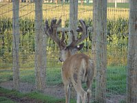 Carpenter Whitetails-dsc07454-copy.jpg